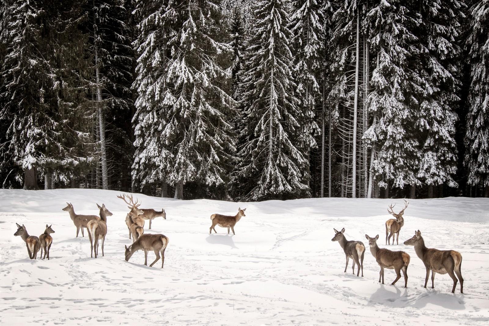 Servizi di incontri Red Deer